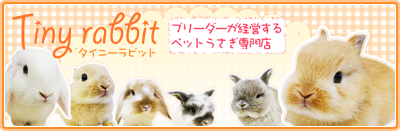 埼玉のうさぎ専門店 Tiny rabbit(タイニーラビット)