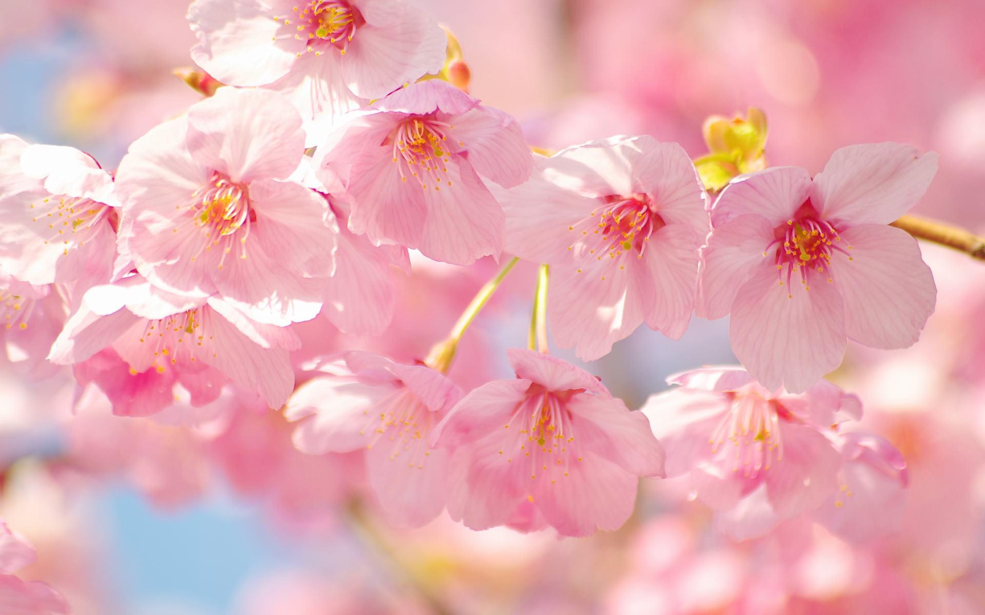 卒業シーズン 京都市左京区の美容室 ヘアーコレットは 品のある
